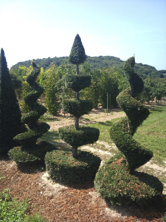 Topiary Nursery, France