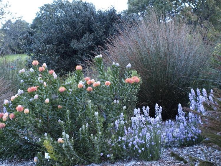 Kirstenbosch Botanic Garden, South Africa