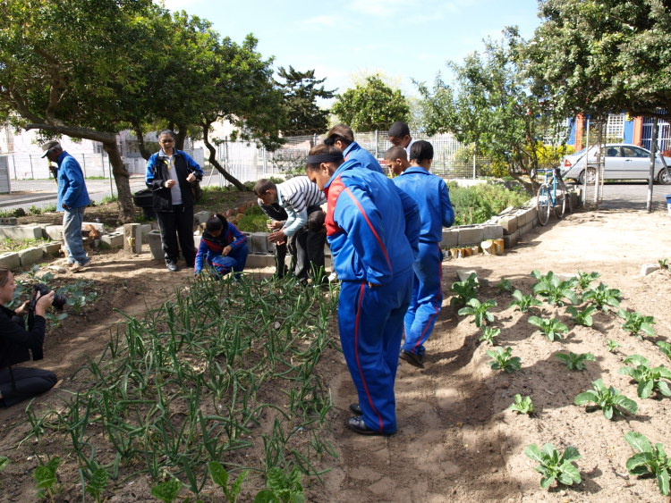 School Vegetable Garden, Cape Town, South Africa
