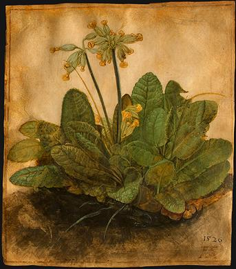 Albrecht Dürer, Tuft of Cowslips, from 1526. It is part of The Armand Hammer Collection in the National Gallery of Art, Washington
