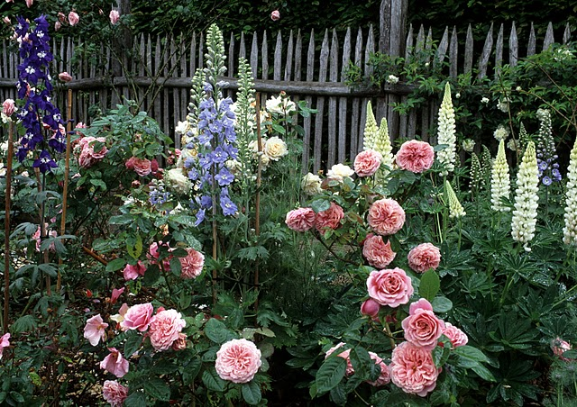 Lupins, Delphiniums and roses. A classic cottage garden combination. Le Jardin du Batiment, France.