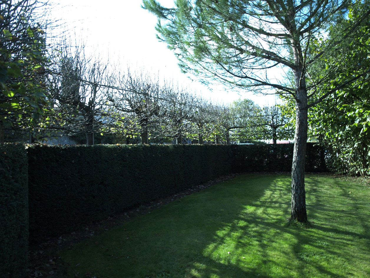 Pleached lime in winter before pruning.  The framework that was used to train the young trees is visible.