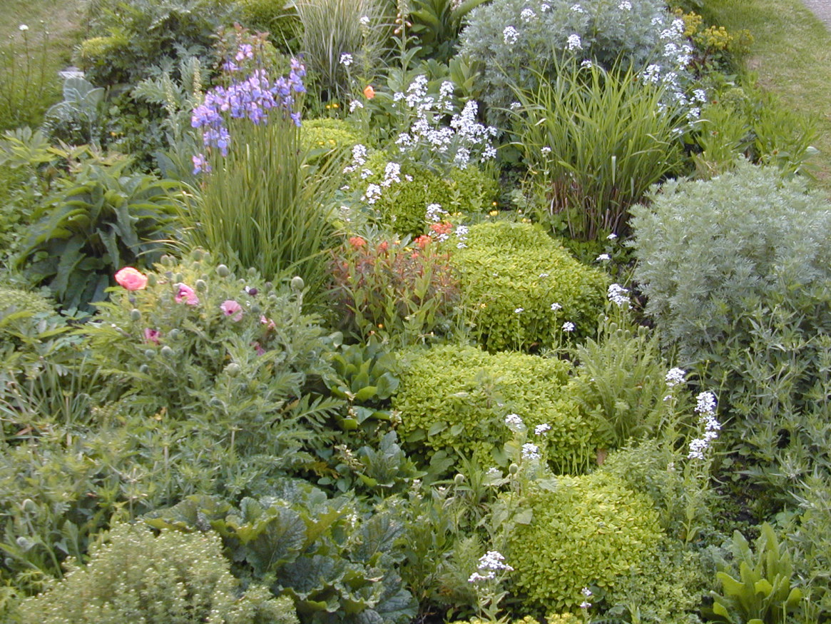 Part of the garden in Hertfordshire, Britain. A dense planting with mounds of Origanum, the last few flowers of Hesperis, oriental poppies and the early shoots of Miscanthus.