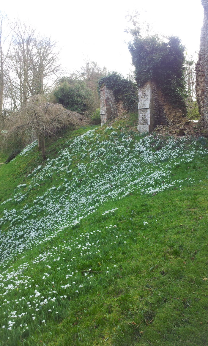 Snowdrops at Bennington Lordship