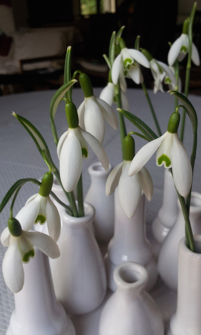 A bud vase filled with Galanthus nivallis
