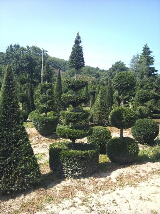 Topiary at the Ripaud Nursery